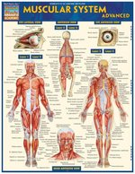 QuickStudy - Study Guide - Muscular System Advanced